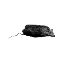 Ratas de decoración